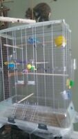 Bird cage and two budgies for sale