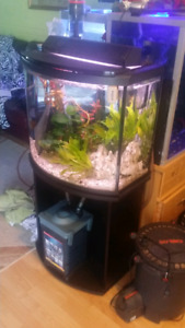 25 gallon bow front