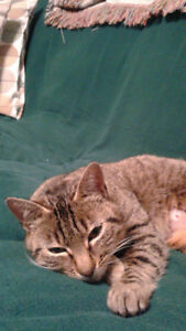 1year Female, Spayed, Friendly but Shy Via Baddeck Cat Rescue