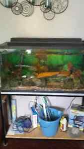 All inclusive fish, tanks and many accessories