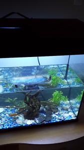 aquarium tout equipe