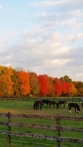 Coming soon horse farm for sale.