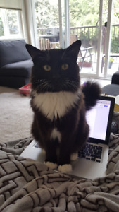 Wonderful Cat for Rehoming