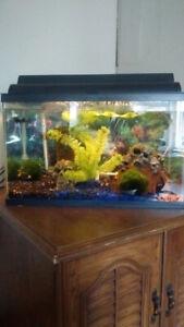 10&26 gallon aquariums