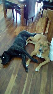 Socialiser chiens