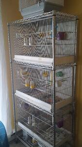 Canaris et cage d'elevage