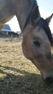 Roxy 8 year old mare