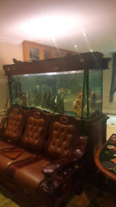 Two Large Fish Tanks with Stands for Sale