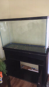 55g Fish Tank with everything