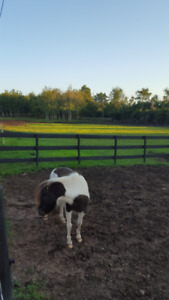 HORSE BOARDING AVAILABLE - YOUR HORSES HOME AWAY FROM HOME