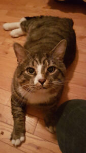 Found cat Moncton north evergreen area