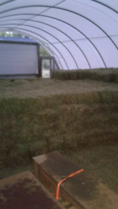 2nd cut square hay/alfalfa bales forsale