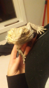 Dudley the Dragon