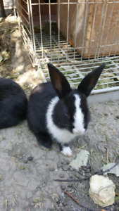 a month old friendly and cute rabbits