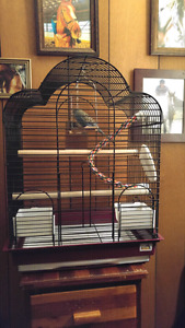 Budgie with cage and accessories