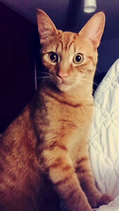 Cat looking for forever home