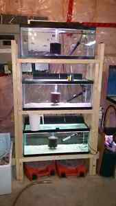 Fish tanks/ grow out rack. African Cichlids