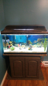 40 gallon aquarium and accessories