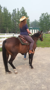 Bay Thoroughbred Mare 12 years old