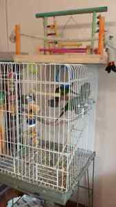 2 conures greencheeked &  1 yellowside