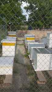 Local Honey from our bee hives. Kitchener / Waterloo Kitchener Area image 4