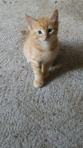 3 kittens looking for forever homes