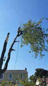 Lumbersmith Tree Removal Services Inc Kitchener / Waterloo Kitchener Area image 6