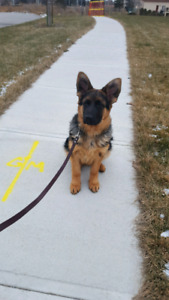 KP DOG TRAINING 15% OFF only untill end of January