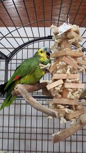 Squawk 'n Talk Bird Club