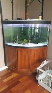 90 gallon corner aquarium