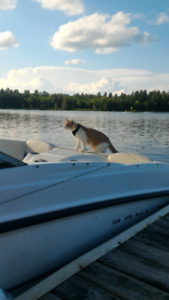 Looking for a waterfront lot or cottage in Muskoka/Simcoe/G.Bay.