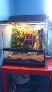 Two crested geckos..Terrarium, food and accessories included