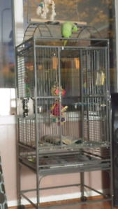 Ring necked parrot with cage
