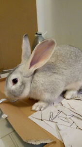 Rabbit Found on River Oaks
