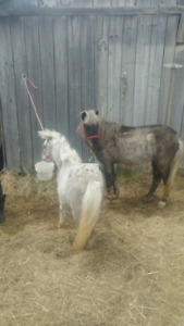 300 or best offer miniature pony and miniature horse