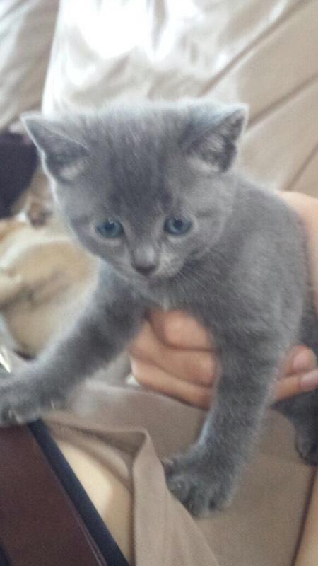 part Bengal kittens for sale   in Exeter, Devon   Gumtree
