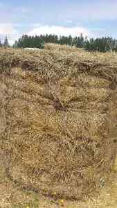 Cattle Hay for Sale