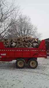 Firewood for sale. Mixed hardwood, Delivery available Kingston Kingston Area image 1