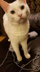 2 year old cat looking for a home