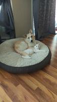 Labrador Mix adorable - chiot de 8 mois
