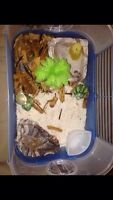 Hermit crab need gone ASAP