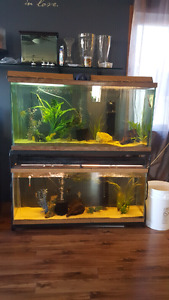 Stacking tanks for sale with Angel fish