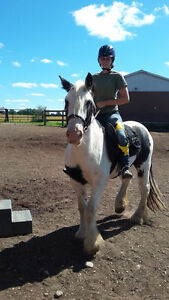 Co-Board a Gypsy Cob or whoever strikes your fancy