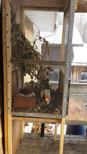 Small animal ( bird ) cage