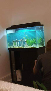 29 gallon fish tank+ parrot fish +cabinet stand