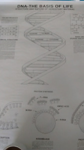 Educational posters ( Biology, Cells, DNA, chromosomes)