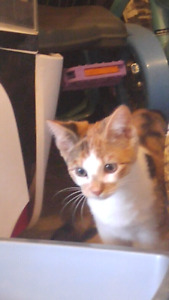4 month old female cat she is great comes with accesories