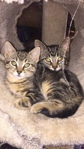 2 Kittens for sale. $150 for the pair!