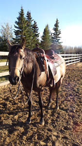 Quarter horse mare for in barn lease