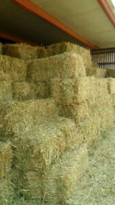 Looking for square bales of hay near Charlottetown